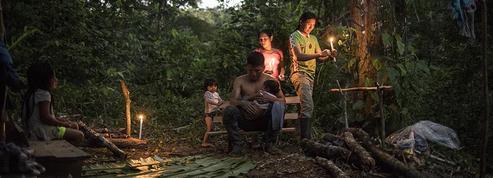 En images : le combat pour préserver la fragile beauté des forêts