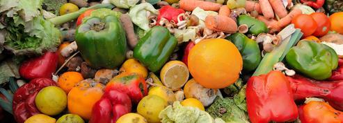 40% de la nourriture produite dans le monde serait perdue, selon une nouvelle étude de la WWF