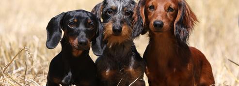 Découvrez 5 races de chiens idéales pour les seniors