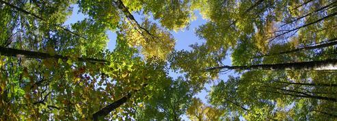 Édouard Cortès: «Les forêts sont des lieux de consolation et de réjouissance»