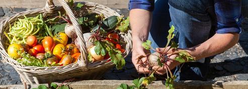 L'été maussade pèse sur les ventes de fruits et de légumes