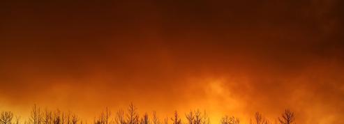 Quatre morts dans des feux de forêt dans le sud de la Turquie