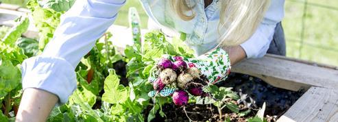 Ce mois-ci au jardin : que planter, semer ou récolter en septembre ?
