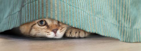Caen : un tortionnaire de chats déclaré irresponsable en appel