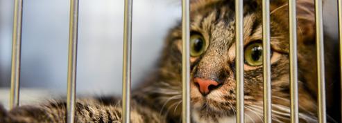 Un article de la proposition de loi contre la maltraitance animale inquiète les associations