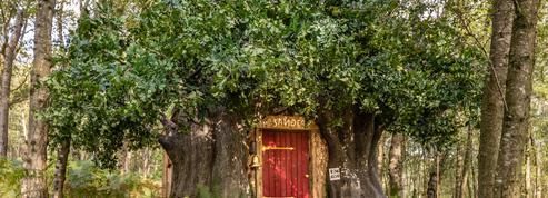 Airbnb met en location la maison de Winnie l'Ourson le temps d'un week-end
