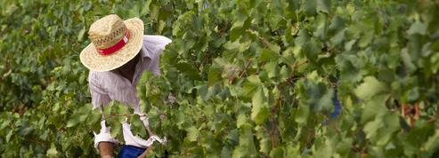 Champagne : huit personnes mises en examen pour avoir exploité une centaine de Bulgares