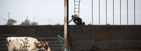 Ceta : la viande bovine canadienne n'a pas encore déferlé sur l'Europe