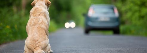 Maltraitance animale: le Sénat examine à son tour la proposition de loi