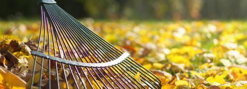 Ce mois-ci au jardin : que planter, semer ou récolter en novembre ?