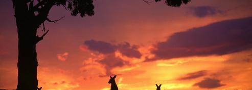 Cinq expériences nature à vivre sur Kangaroo Island, sanctuaire de la biodiversité en Australie