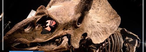 Le tricératops Big John vendu pour plus de 6 millions d'euros