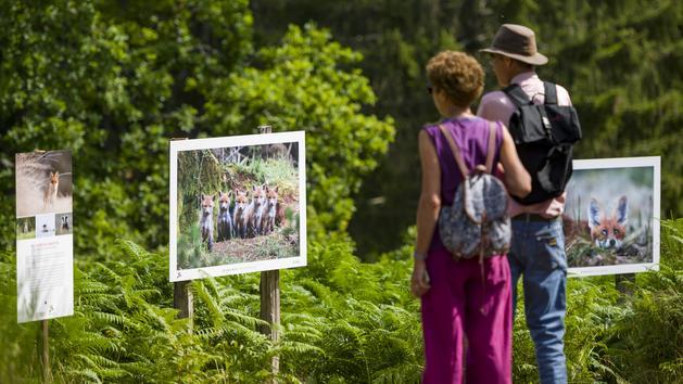 Ours, renard, lynx... Une exposition photo met en avant la faune des Vosges