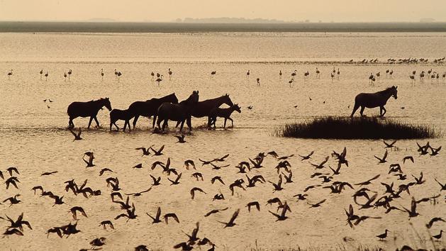 Andalousie côté nature : safari ibérique dans le parc national de Doñana