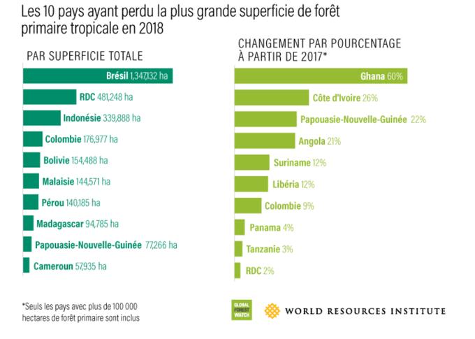 Classement des 10 pays ayant perdu la plus grande superficie de forêt.