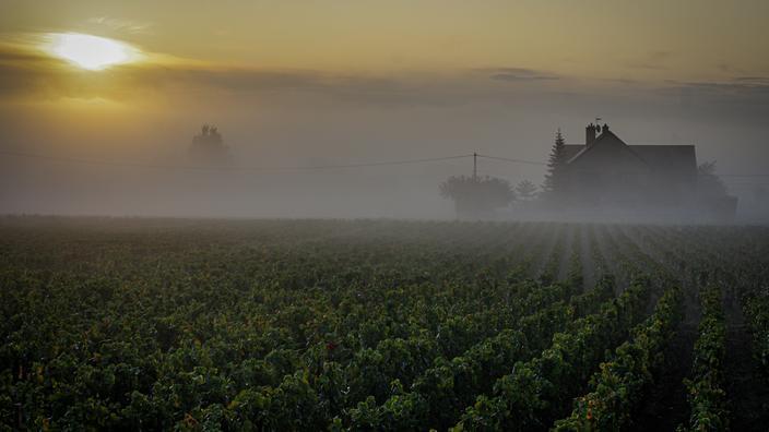 En Côte-d'Or, fugue en 6 étapes sur les traces des grands crus de Bourgogne
