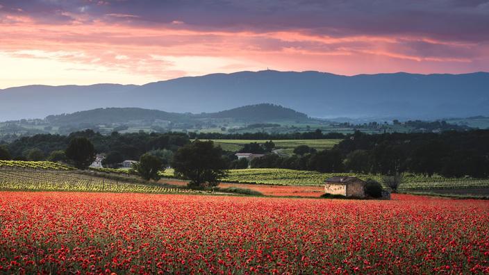 Tulipes, jonquilles et coquelicots, où admirer les plus belles floraisons du printemps en France