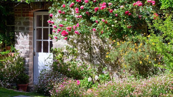 Ce mois-ci au jardin : que planter, semer ou récolter en juin ?
