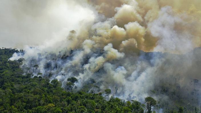 Brésil : 94% de la déforestation en Amazonie est illégale