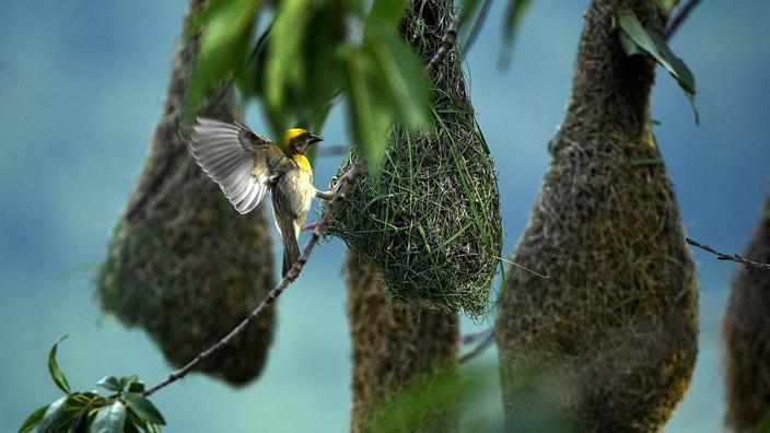 La Société américaine d'ornithologie veut changer les noms d'oiseaux «problématiques»