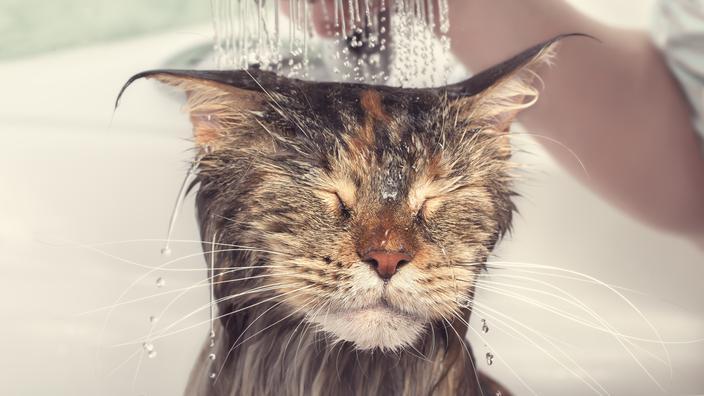 Faut-il laver son chat ?