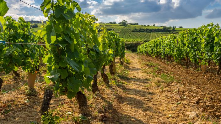 Regarder la vidéo Investir dans une vigne: les appellations plus rentables et celles qui grimpent