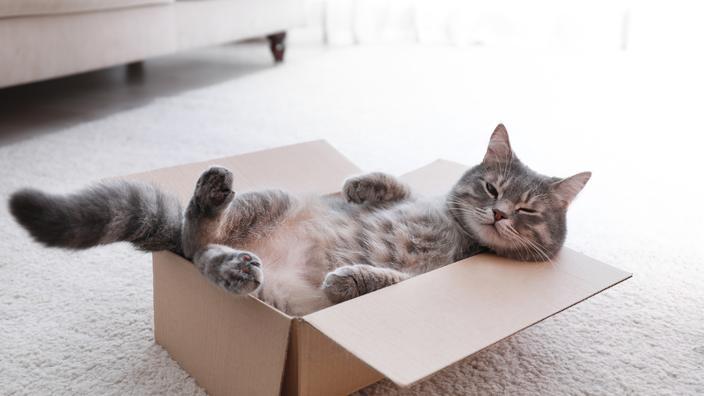 Espérance de vie, calcul en années humaines : tout savoir sur l'âge de votre chat