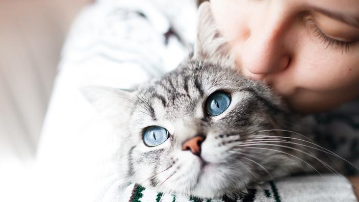 Découvrez 5 races de chats qui vivent longtemps
