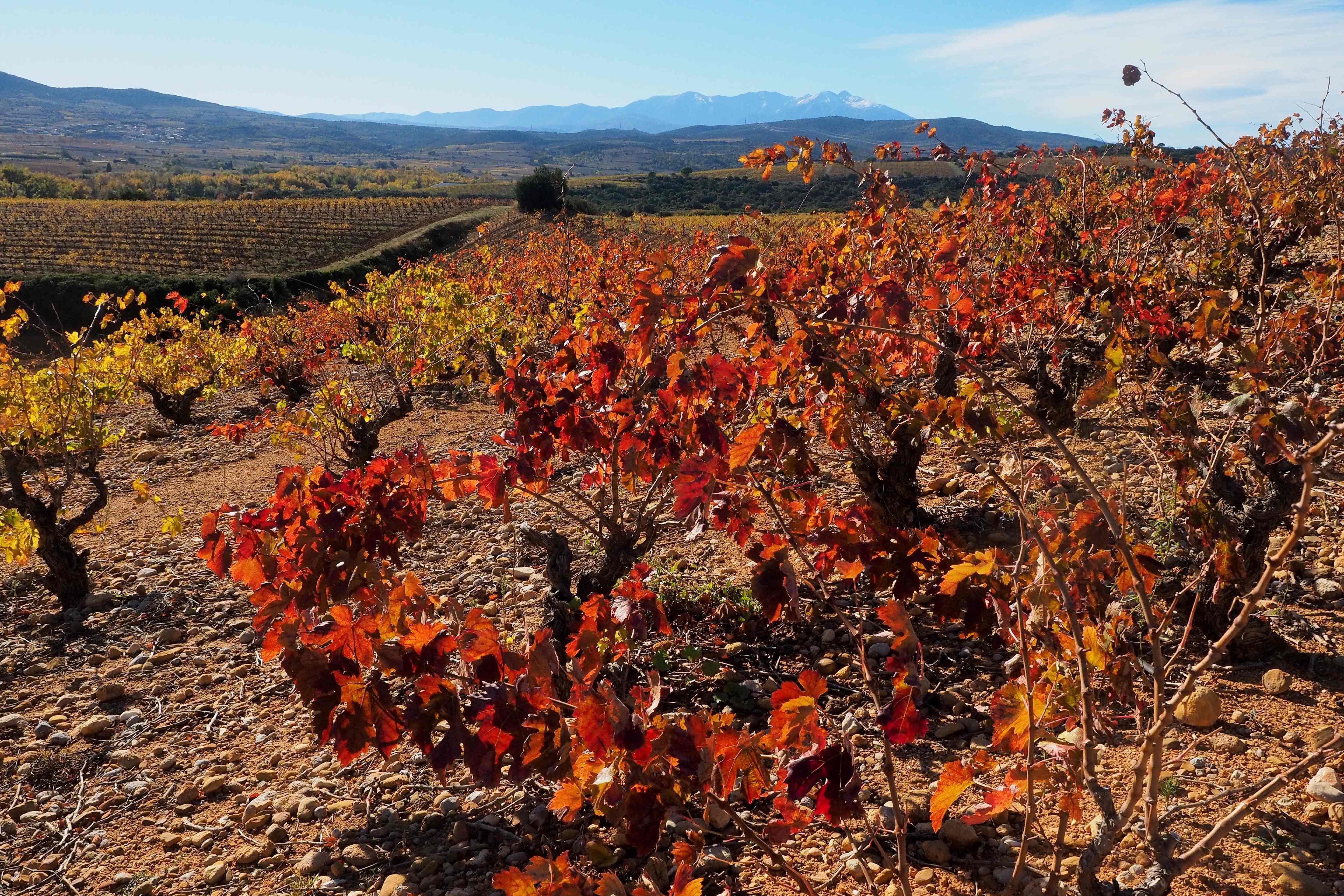 Il y aura moins de vin en 2019, en raison du gel et de la canicule