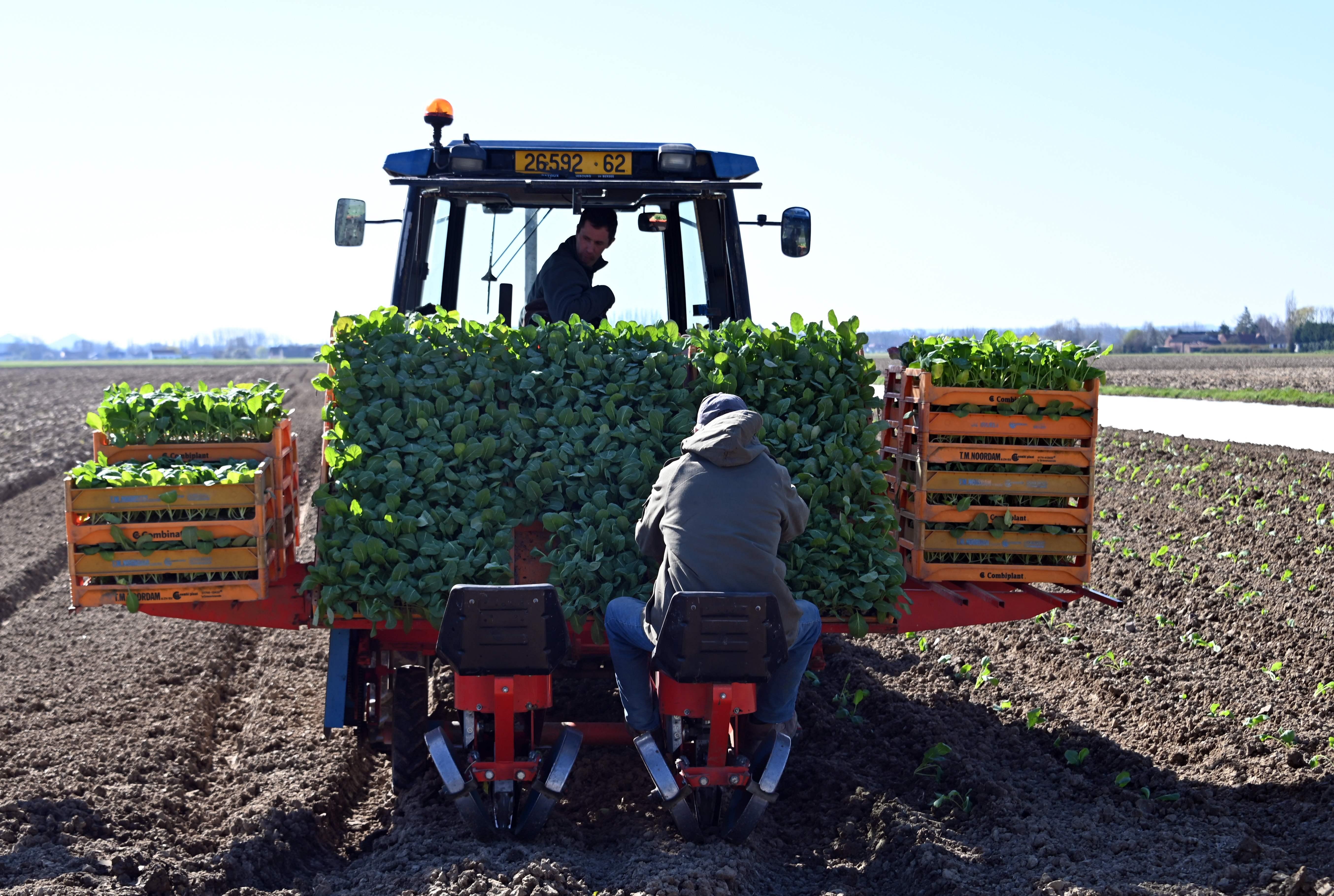 Le gouvernement appelle ceux «qui n'ont plus d'activité» à rejoindre «l'armée de l'agriculture»