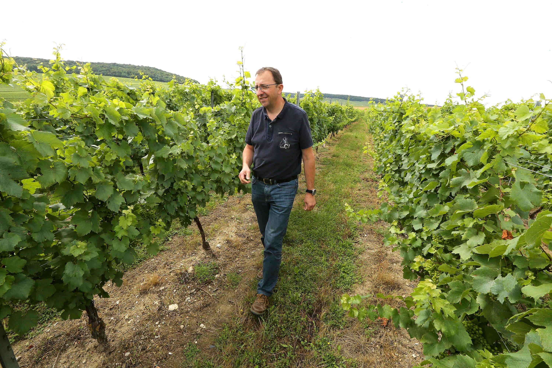 Champagne: les vignerons pourront replanter des vignes plus espacées
