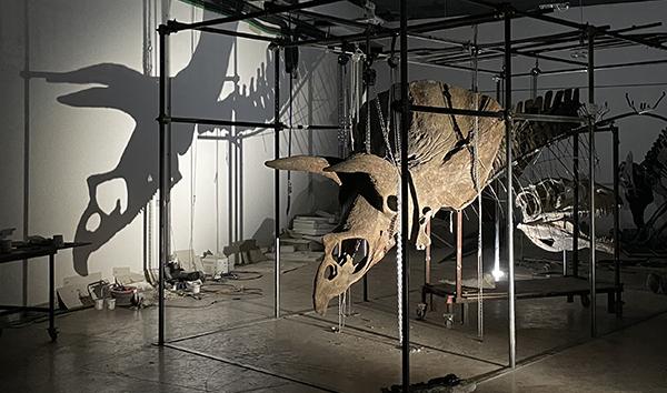 Le plus grand tricératops du monde exposé à Paris à partir du 16 septembre