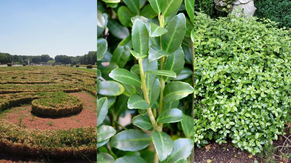L\'actualité du jardin, conseils et décorations tendances en jardinage