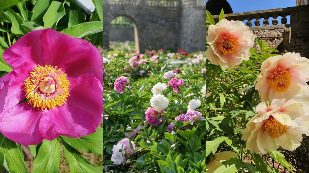 l'actualité du jardin, conseils et décorations tendances en jardinage