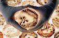 Aspergilloses: quand des champignons viennent à l'assaut de nos poumons