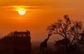 A la découverte des big five en Afrique du Sud