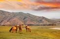 5 raisons de partir en Mongolie