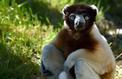Saurez-vous reconnaître les animaux insolites du zoo de Paris?