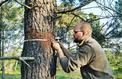 Lire le climat dans les cernes des arbres