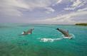 Aux Caraïbes, des bouteilles en plastique sauvées des mers pour faire des routes