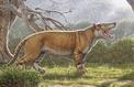 Les trésors cachés des collections de fossiles de musées