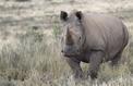 Alerte mondiale sur la biodiversité