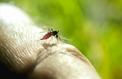 Le moustique tigre implanté dans plus de la moitié des départements, dont Paris