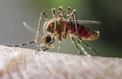 Des chercheurs veulent diminuer la motivation des moustiques à nous piquer