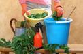 Parasitisme: peut-on soigner les plantes par les plantes?