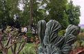 Épicurieuses succulentes