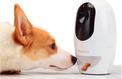 La folie des objets connectés pour chiens et chats