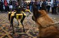 Le chien-robot de Boston Dynamics sera commercialisé avant la fin de l'année