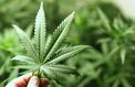 Le cannabis était fumé à des fins rituelles en Chine il y a 2500 ans