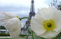 Des bouquets de fleurs dans les rues de Paris
